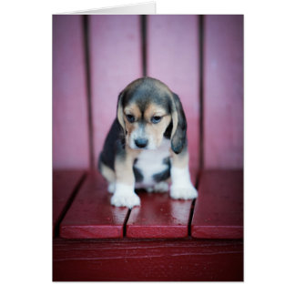 Baby Beagle on Red Chair Card