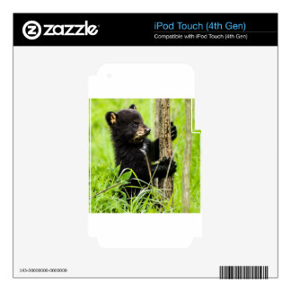 Baby Bear Decal For iPod Touch 4G
