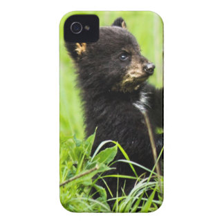 Baby Bear iPhone 4 Cover