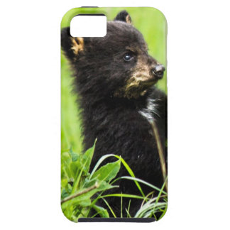 Baby Bear iPhone SE/5/5s Case