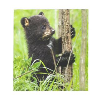 Baby Bear Note Pad