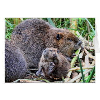 Baby Beaver and Family Photo Card
