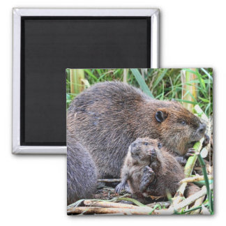 Baby Beaver and Family Photo Magnet