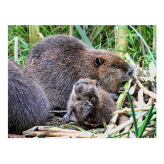 Baby Beaver and Family Photo Postcard