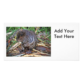 Baby Beaver Photo Card