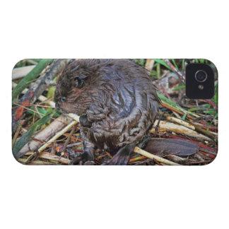 Baby Beaver Photo Blackberry Bold Cases