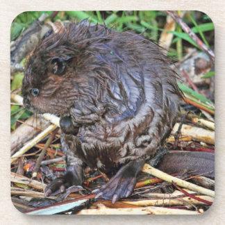 Baby Beaver Photo Coaster