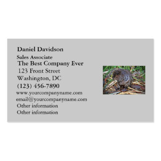 Baby Beaver Photo Double-Sided Standard Business Cards (Pack Of 100)