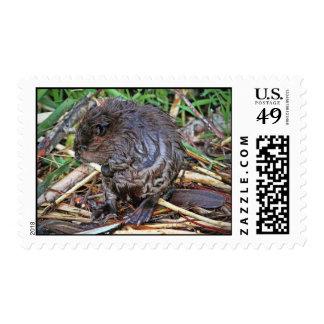 Baby Beaver Photo Postage