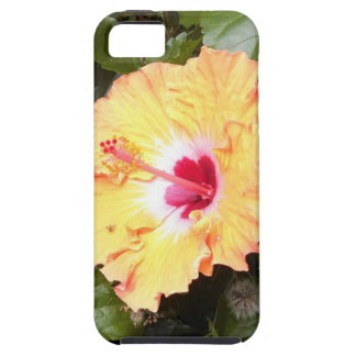 Baby Bee Beautiful Flower iPhone 5/5S Case