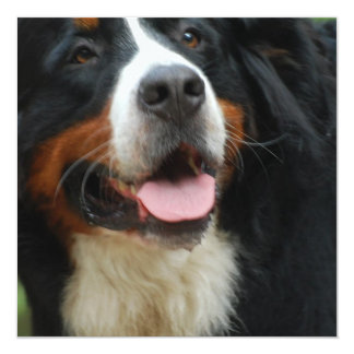 Baby Bernese Mountain Dog Card