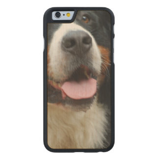 Baby  Bernese Mountain Dog Carved® Maple iPhone 6 Case