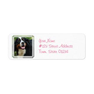 Baby Bernese Mountain Dog Label