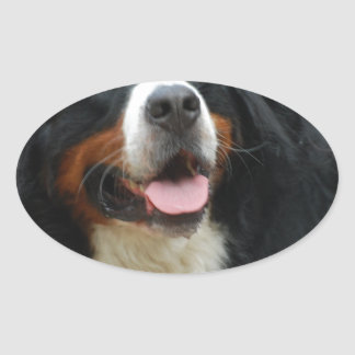 Baby Bernese Mountain Dog Oval Sticker