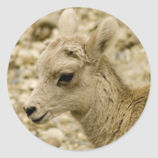 Baby Big Horned Mountain Sheep Stickers
