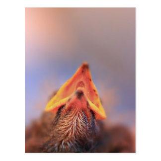 Baby Bird 2 Postcard