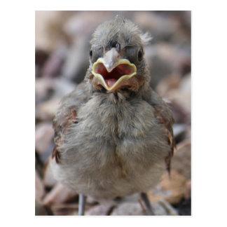 Baby Bird Attitude Postcard
