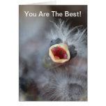 Baby Bird Card