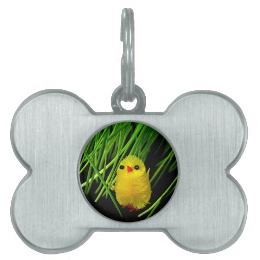 Baby bird chicken waiting for mom and love pet name tag