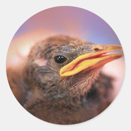 Baby Bird Classic Round Sticker