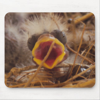Baby Bird Mouse Pad
