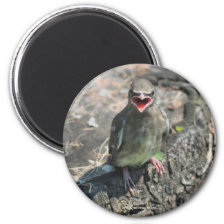 Baby Bird Nature Photography Magnet
