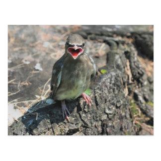 Baby Bird Nature Photography Postcard