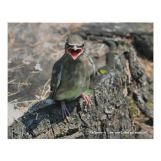Baby Bird Nature Photography Poster Print