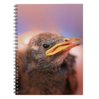 Baby Bird Notebook