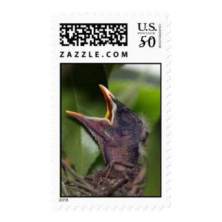 Baby Bird stamp