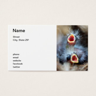 Baby Birds Business Card