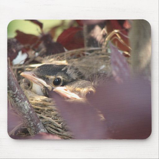 Baby birds mouse pad