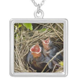 Baby Birds Necklace
