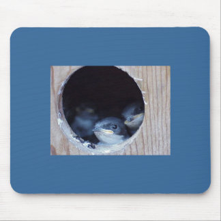 Baby Birds Peeking their head out of nest Mouse Pad