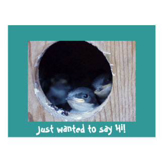 Baby Birds Peeking their head out of nest Postcard