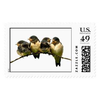 Baby Birds Stamp