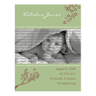 Baby Birth Announcement Sage Green Branch Design Post Cards