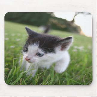 Baby black and white kitten in grass mousepad