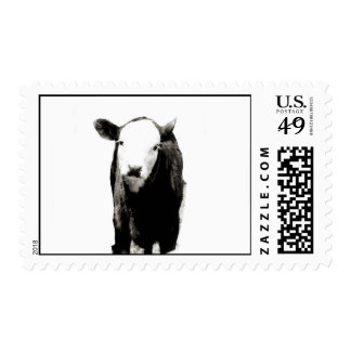 Baby Black Calf pos days Stamp in Black and White