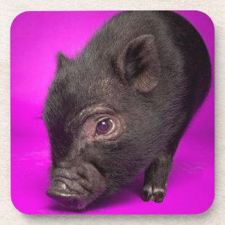 Baby Black Pig Beverage Coaster