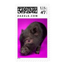 Baby Black Pig Postage