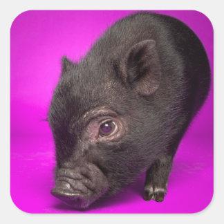 Baby Black Pig Stickers