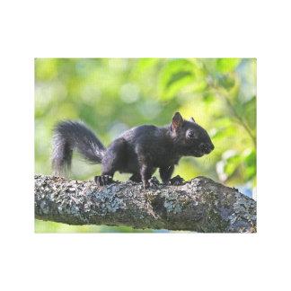 Baby Black Squirrel Canvas Print