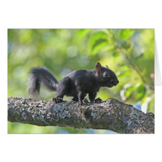 Baby Black Squirrel Card