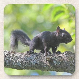 Baby Black Squirrel Beverage Coaster