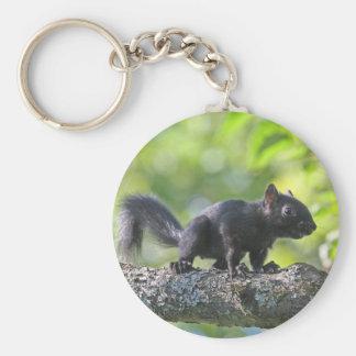Baby Black Squirrel Key Chains