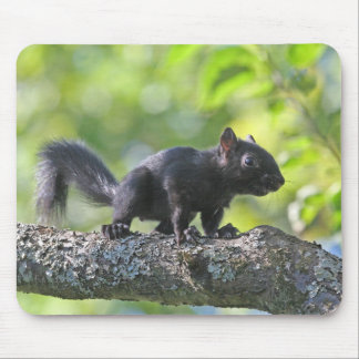 Baby Black Squirrel Mouse Pad