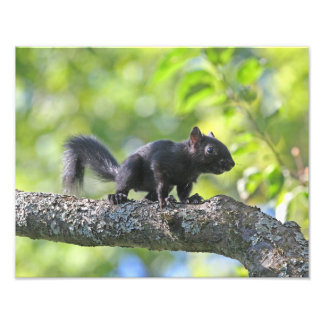 Baby Black Squirrel Photo Print