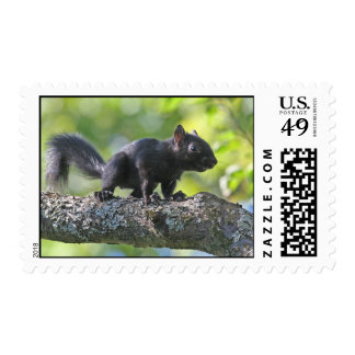 Baby Black Squirrel Stamps
