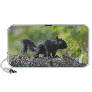 Baby Black Squirrel Travelling Speakers